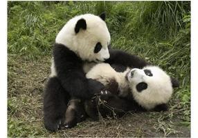 Playful Pandas