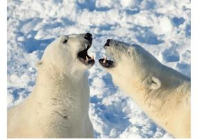 Polar Bears Image