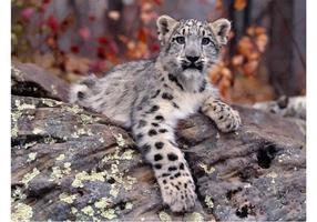 Cachorro de leopardo de nieve
