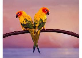 Parrots Par