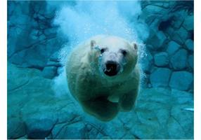 Oso Polar Imagen Vectorial