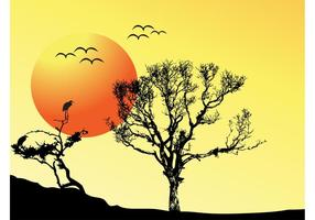 Tree Sunset Background