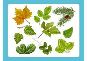 Realistic-leaf-vectors