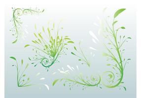 Delicate Plants