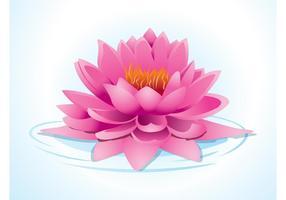 Lotus Rosa