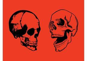 Cráneos felices
