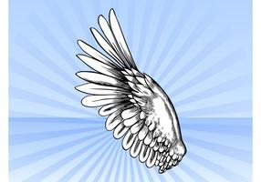 Bird Wing Vector