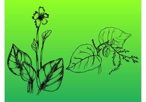 Handdragen Växter