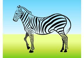 Zebra Umriss