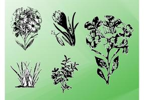 Vektor Pflanzen