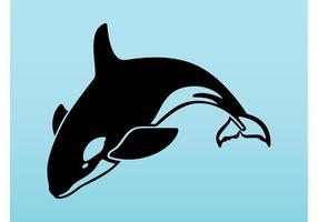 Orca Vektor