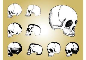 Mänskliga skalle