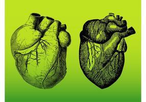 Realistiska hjärtor