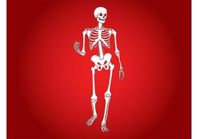 Glückliches Skelett