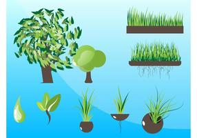 Växter grafiska vektorer