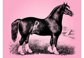 Vintage Horse Sketch
