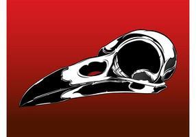 Vecteur crâne oiseau
