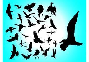 Pássaros voadores