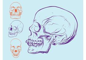 Cráneos coloridos