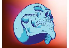 Graphiques de crâne