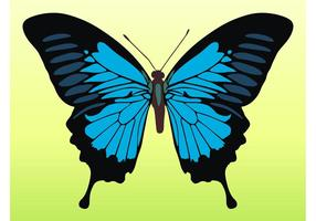 Pretty-butterfly-vector