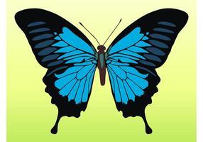 Vector bastante mariposa