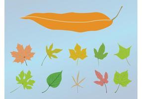 Conception des feuilles