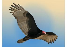 Vecteur vautour