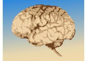 Gehirn Grafiken