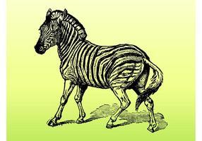Zebra-Vektor