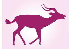 Laufende impala