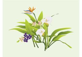 Bouquet gráficos