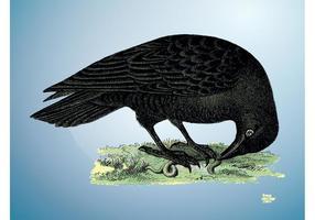 Vecteur corbeau