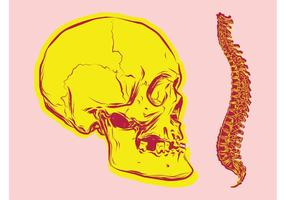 Vectores de huesos