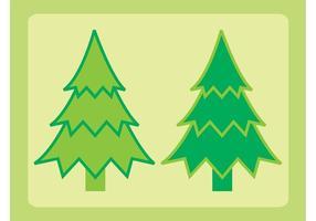 Arbres à feuilles persistantes
