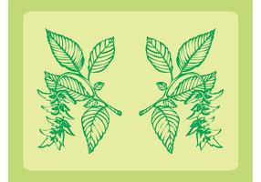 Frische Pflanzen Ornamente