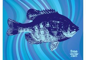 Fisch Vektorgrafiken