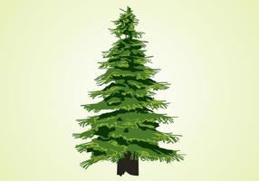 Árbol de hoja perenne Vector