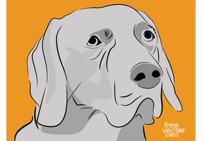 Labrador Retriever Vector