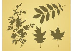 Leaves-vector-graphics