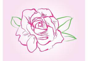 Rose Zeichnung Vektor