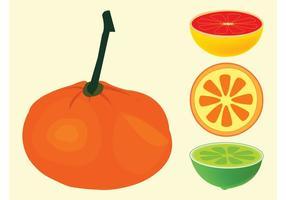 Citrus Fruits Vectors