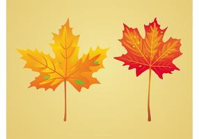 Ahorn-Herbst-Blätter