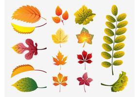 Tomber vecteur feuilles