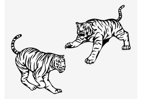 Angry Tigers Vector