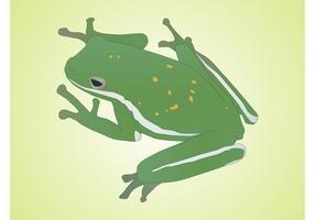 Vecteur de grenouille