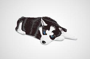 Vector Husky bebé