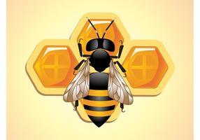 Vetor abelha