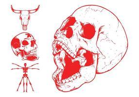 Skulls And Skeleton