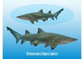 Graphiques de requin